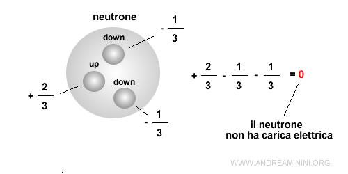 il neutrone è composto da tre quark Down Down Up ( d d u ) che determinano la sua carica elettrica neutra